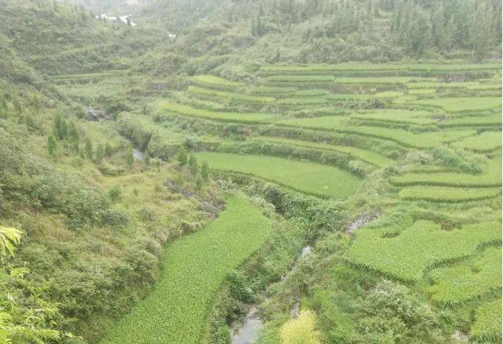 铜仁市万山区2018年水土流失重点治理龙溪小流域水土保持生态治理工程